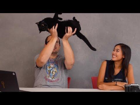 Cameras, Cats & NO MORE D850 talk*! TOGLIFE