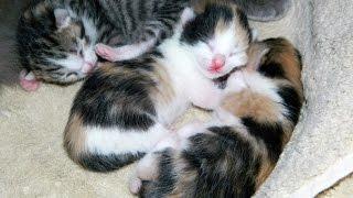 Новорожденные котята * Newborn kittens