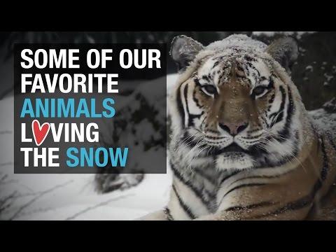 Animals loving the snow