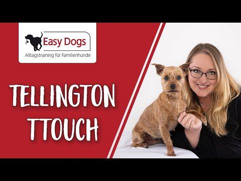 schnelle hilfe bei ngstlichen hunden easy dogs tipps. Black Bedroom Furniture Sets. Home Design Ideas