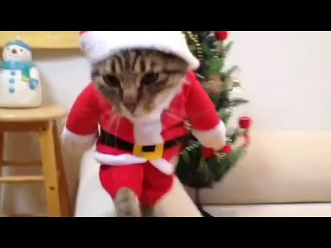 Funny Santa Cat Costume - YouTube