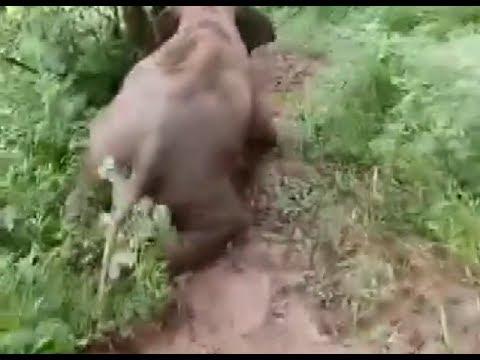Cute Little Elephant Slides Down Slope for Fun