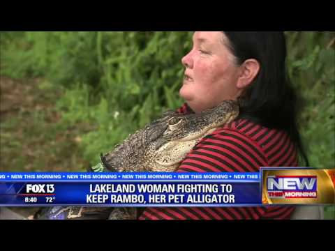 Florida woman's fight to keep alligator