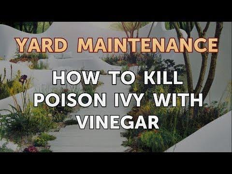 Poison Ivy With Vinegar