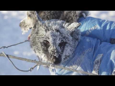 Random Movie Pick - Winterdance Trailer YouTube Trailer