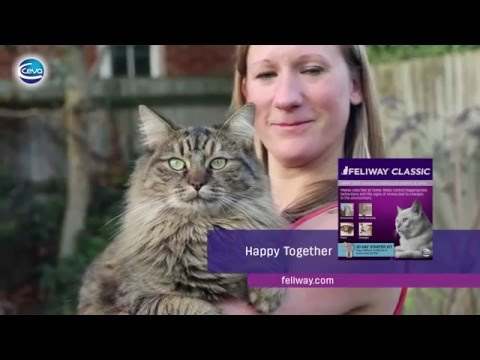 How to use FELIWAY CLASSIC Diffuser