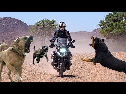 Köpek Saldırıları ( Motosiklete Saldırdılar !! Ve Kaza Oldu ) Dogs Attack'' Dangerous Dogs