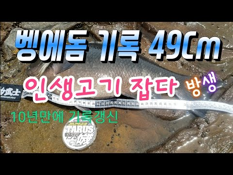 벵에돔 기록갱신 49Cm 인생고기 88회 My Biggest Opaleye Catch Ever Palos Verdes