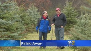 Wisconsin Farm Has Thousands Of Christmas Trees