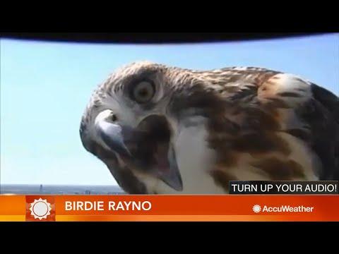 HILARIOUS: Meet AccuWeather meteorologist 'Birdie Rayno'
