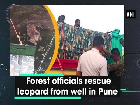 Forest Officials Rescue Leopard From Well In Pune | ANI News