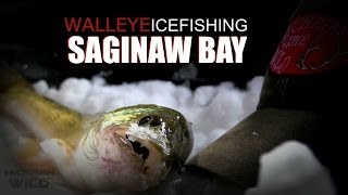 Saginaw Bay Walleye Ice fishing Non-stop Action