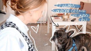 Ο Σκύλος Διαλέγει το Look της Μέρας μου