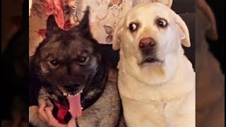 Awesome Funny Animals' Life Videos  Funniest Pets