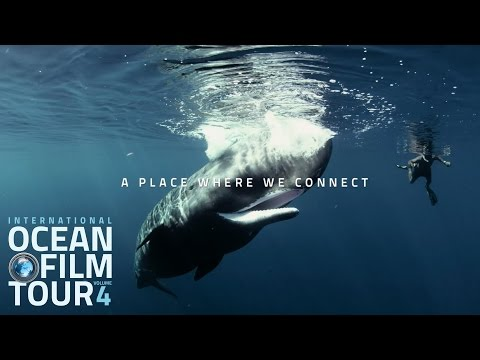 International OCEAN FILM TOUR | OCEAN LIFE