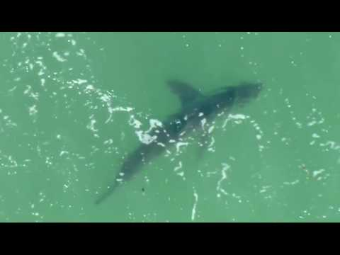 Portion Of Huntington Beach Closed After Shark Sightings