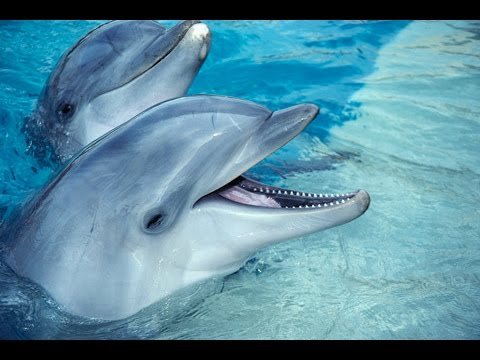 Documental de delfines.