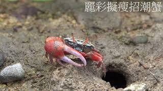 Publication Date: 2019-11-04 | Video Title: 優異 - 「螯」翔東涌灣 - 東涌天主教學校