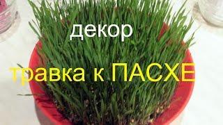 ДЕКОР-ТРАВКА К ПАСХЕ ЗА 7 дней.