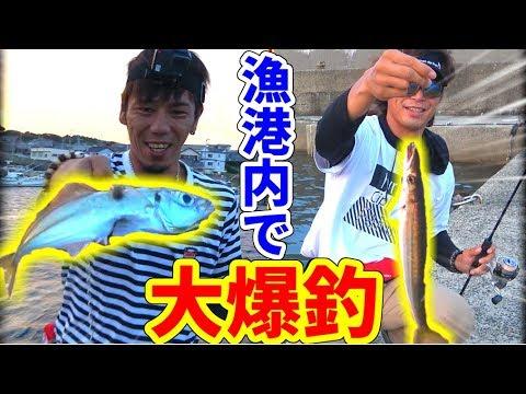 #2 漁港内に魚が大量にいると聞いてルアーを投げてみると・・・