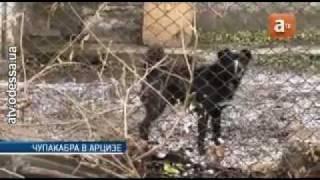 На жителя Одесской области напала чупакабра