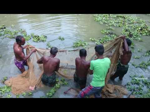 Amazing Fish Catching With Cast Net | Sylhet |