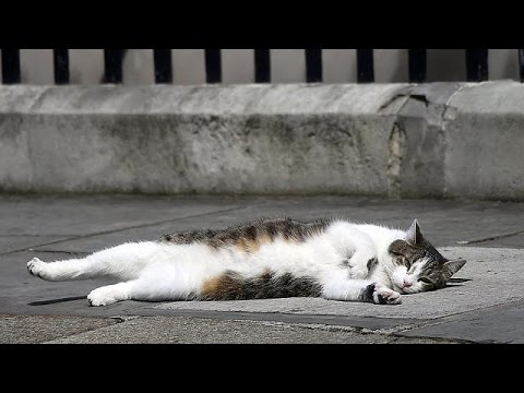 Post-Brexit stability at last as Larry the Cat remains at Number 10