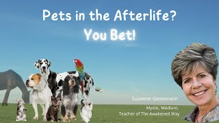 Pets in the Afterlife?  You Bet!