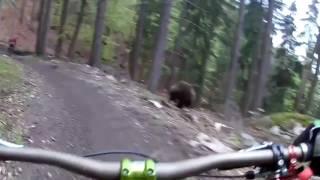 Голодный медведь встретил велосипедиста; Видео приколы