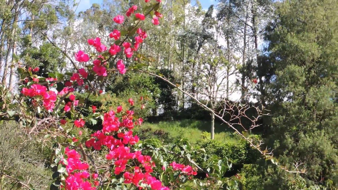 4378 flores rosas y purpuras con fondo de monta a y - Arbol de rosas ...