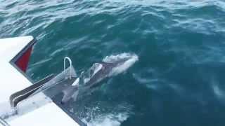 Dolphins filmed from Stardust II Boat Trips, Portree, Isle of Skye yesterday 25.11.14