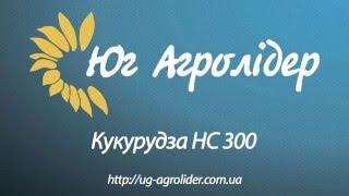 Описание гибрида кукурузы НС 300