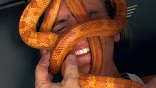 SNAKE MASSAGE AT MY REPTILE ZOO!!! | BRIAN BARCZYK