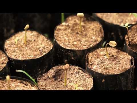 Fairtrade Africa: Empowering Kilimanjaro's Indigenous Coffee Farmers