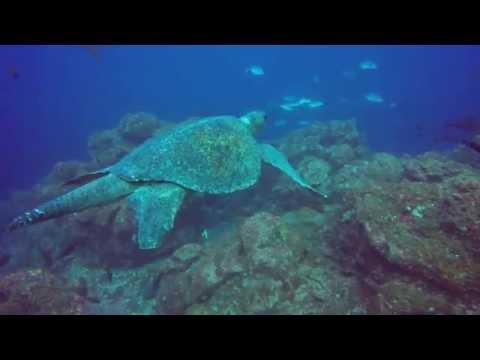 ENDANGERED OCEANS, SEA TURTLES