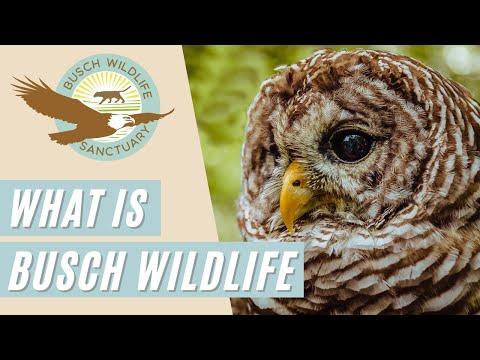 ABOUT US |  Busch Wildlife Sanctuary: Where Native is Nurtured