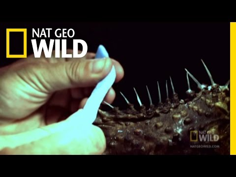 Stone Fish Blues | Nat Geo Wild