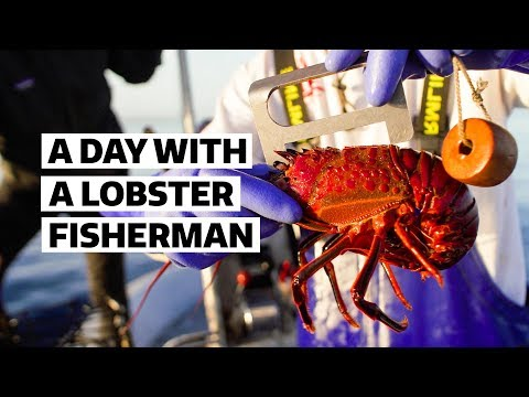 Fishing San Diego Spiney Lobster Is Harder Than You Think | Sourced