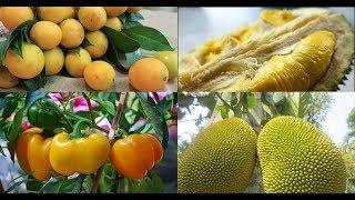 Những loại trái cây cấm kỵ đặt lên ban thờ ngày Tết nếu không muốn kiệt quệ tài lộc
