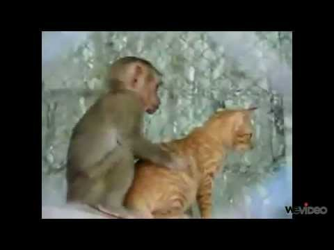 Sapık Maymun