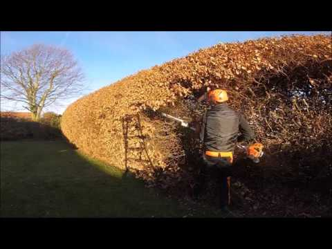 Beech Hedge Reduced Reduction Youtube