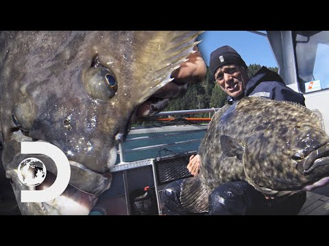 Jeremy Catches A Giant Cold-Water Killer With 2 Eyes On The Side Of Its Face | River Monsters