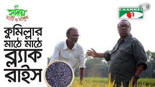 ১০ একরে কালো ধানের দারুণ ফলন | Black Rice | Shykh Seraj | Channel i |