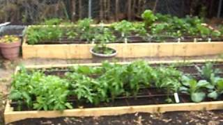 Raised Bed Square Foot Organic Vegetable Garden Part 1