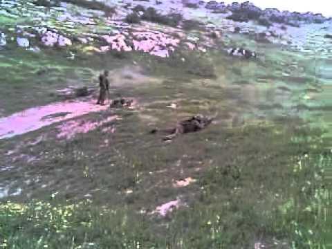 entrainement commando armee algerienne