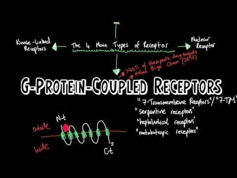 G-Protein-Coupled Receptors|A Brief Introduction