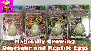 Magically Growing Dinosaur Egg and Reptile Eggs - Toy Opening Video