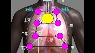 看護学生講座 146 聴診 「肺音の聴取部位 と 聴取方法」