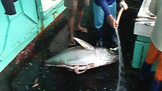 P2277572-大目鮪起魚後續處理-4分45秒-.MOV thumbnail