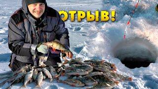 Пулемётный клёв окуня Зимняя рыбалка Ловля окуня Щука Плотва